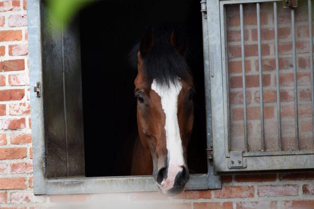23_paardje